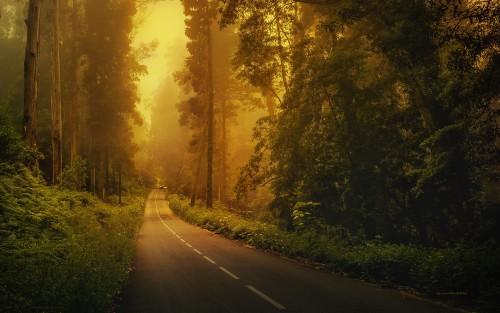 road_1920_1200.jpg