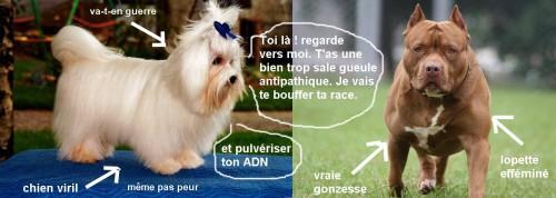 humour-chiens9b060c0026b88060.jpg