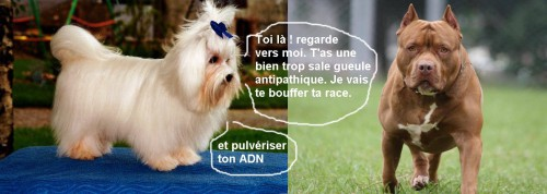 humour-chiens.jpg