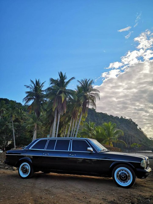 JACO-BEACH-PALM-TREE-LIMOUSINE-CENTRAL-AMERICA.jpg